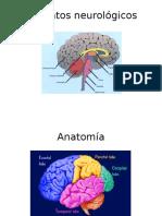formatos neurologicos