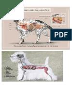 Anatomia Perruna
