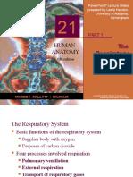 Respiratory Domenico