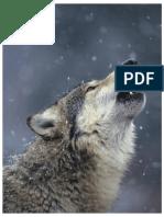 Biología La Vida en La Tierra Con Fisiología 9º Edición