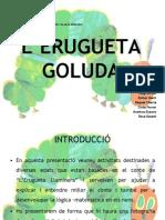 ERUGUETA1