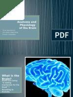 The Brain Cerebrum