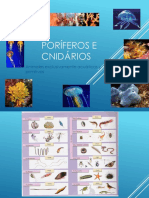 poriferos_e_cnidarios.pdf