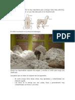 crianza ovinos