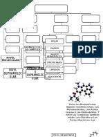 Niveles de Organizacion Quimica