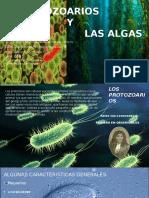 Los protozoarios y las algas