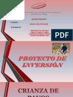 Proyecto de Inversión - Crianza de Pavos