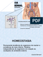 Aula 2 - Fisiologia Renal I