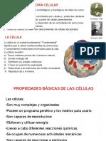 CELULA PROCARIOTA Y EUCARIOTA.pdf
