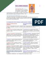 los-sistemas-circulatorio-y-linfatico-comparado.doc