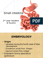 Small intestine.pptx