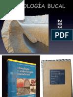 A-EMBRIOLOGIA Y DENTINOGENESIS 2 (1).ppt
