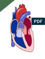 Jantung bergerak