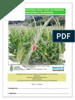 Report on Gladiolus Marketing Trail to Rawalpindi and Islamabad 8 Sep, 2016