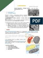 Mitokondrium-plasztisz-bioszfera