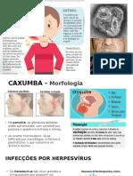 Caxumba, Herpesvírus, Hepatite b e Mononucleose
