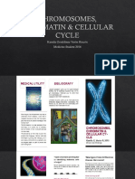 Chromosomes, Chromatin & Cellular Cycle 2
