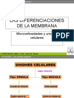 unionescelularesymicrovellosidades-091119064237-phpapp02