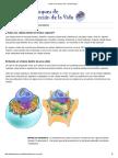 Partes de una celula _ ASU - Ask A Biologist.pdf