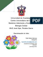 germinacion in vitro