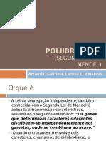 Polibridismo - Apresentação PowerPoint