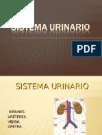 sistema-urinario.ppt