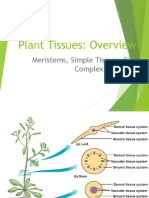 Plant Tissues.ppt