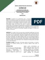 Informe de Laboratorio Biología Basica