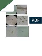 Chlorophytas y demas