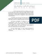 TRABAJO DE ZOOLOGIA DE VERTEBRADOS 01.docx