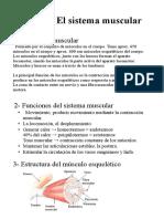 Anatomía - Tema 3