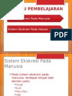 Bab Sistem Ekskresi Manusia Lengkap 2