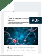 Tipos de Neuronas_ Características y Funciones