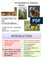 Diseases of Neonates in Animals