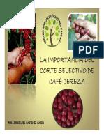 Corte Selectivo de Cafe Cereza