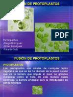 Presentacion de Biologia, Protoplastos