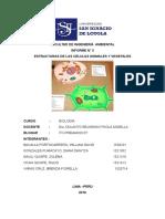 informe- tejidos animal y vegetal (observación en microscopio)