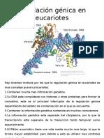 Regulación Génica en Eucariotes