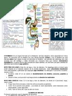 Sistema Gisgestivo Fisiologia