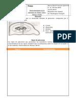 Placentas Mamiferos