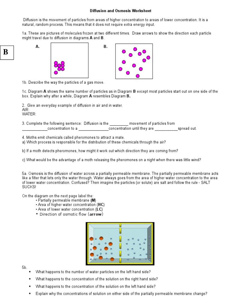 Diffusion and Osmosis Worksheet 1 Osmosis – Tonicity and Osmosis Worksheet