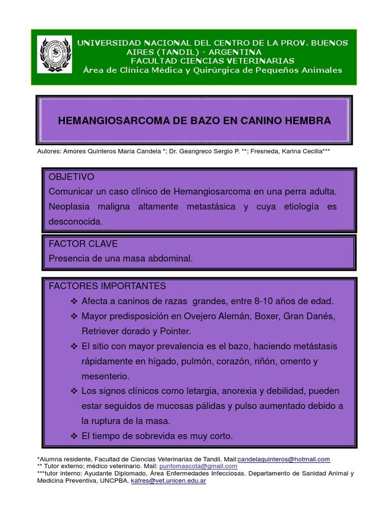 Hemangiosarcoma Bazo Canino