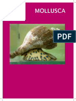 Mollusca MMA