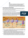 Electron Transport Chain - Cellular Respiration and Photosynthesis