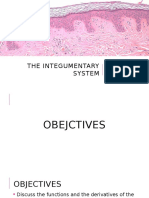 The Integumentary System powerpoint presentation
