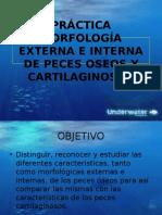 Peces Oseos Morfo Externa (1)
