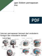 Pengembangan Sistem Pernapasan Dan Diafragma