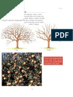 Rezidba jabuka.pdf