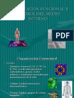 1.- Origen y organización del cpo.pdf