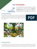 Ecosistema y Contaminacion Ambiental